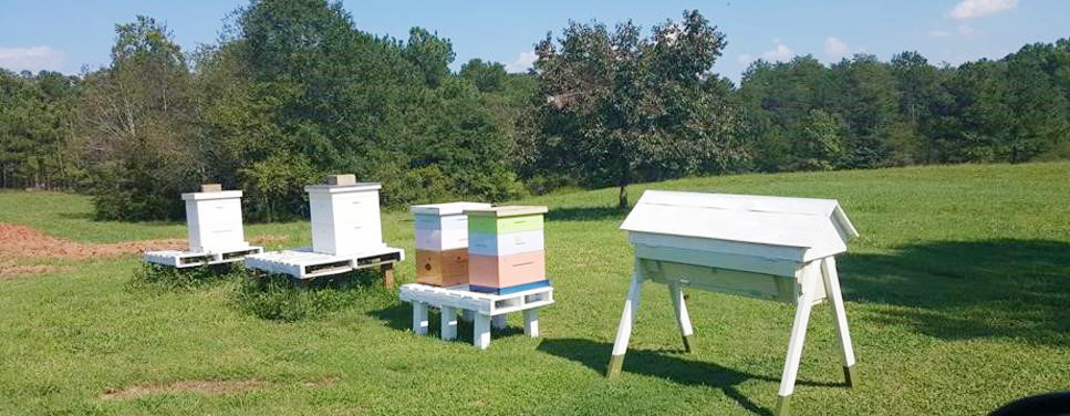 MAKING HONEY BEE HIVES WITH RAPTOR®